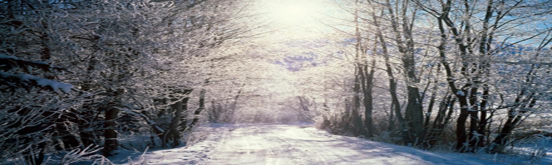 world___switzerland_snowy_woods__bern__switzerland_007911_1